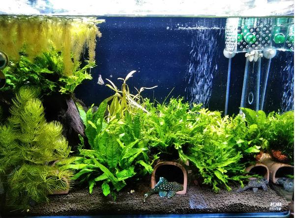 自作排水アクセサリを設置した水景