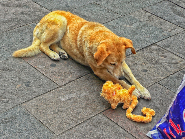 Perro junto a un juguete en la peatonal