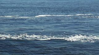 Texto de Ciências: Acidificação dos oceanos afeta biodiversidade