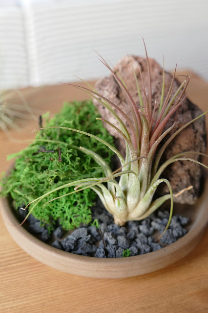 buy airplant kits,natural stone pots uk,bonsai accent pot etsy,uk air plant kit shop,potpal etsy,potpal shop,potpal review,potpal Clive,