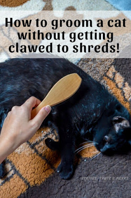 Grooming cats without getting scratched