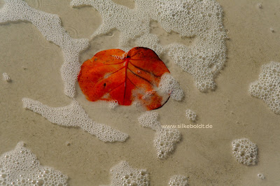 Wenn Du wüsstest, wie wertvoll leben ist ... Blog schreiben Silke Boldt