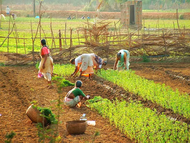 Indian Farmers And Their Types Of Farming For Agriculture