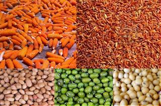 Mengetahui Jenis Vitamin Untuk Merpati Balap