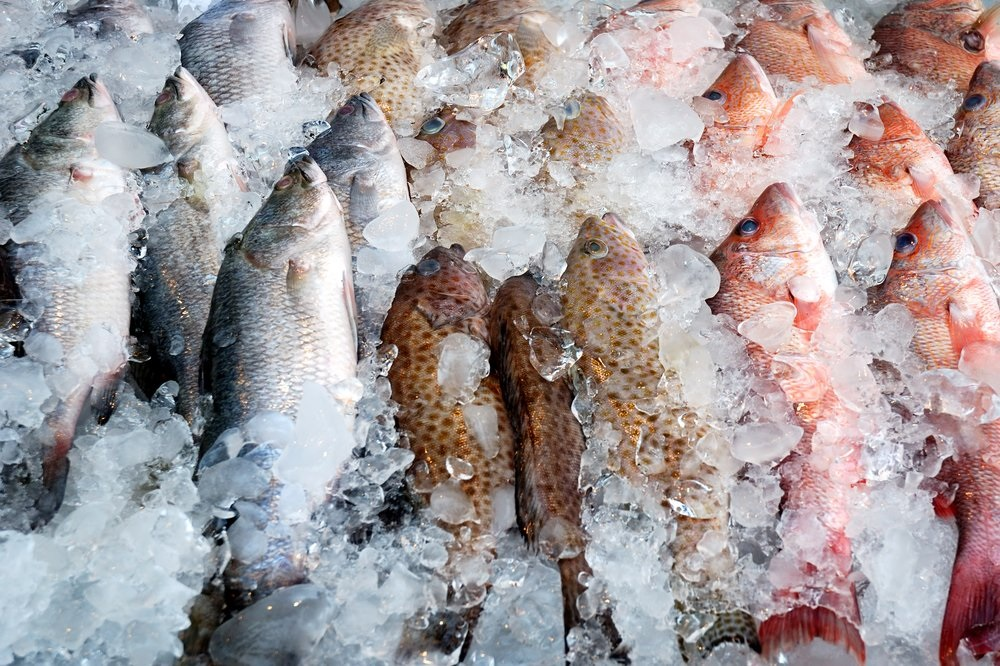 Image result for frozen fish nigeria customs