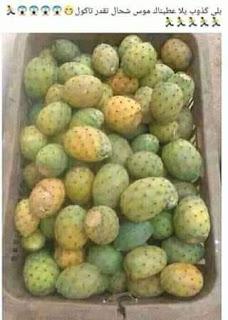 فوائد التين الشوكي الفاكهة العجيبة