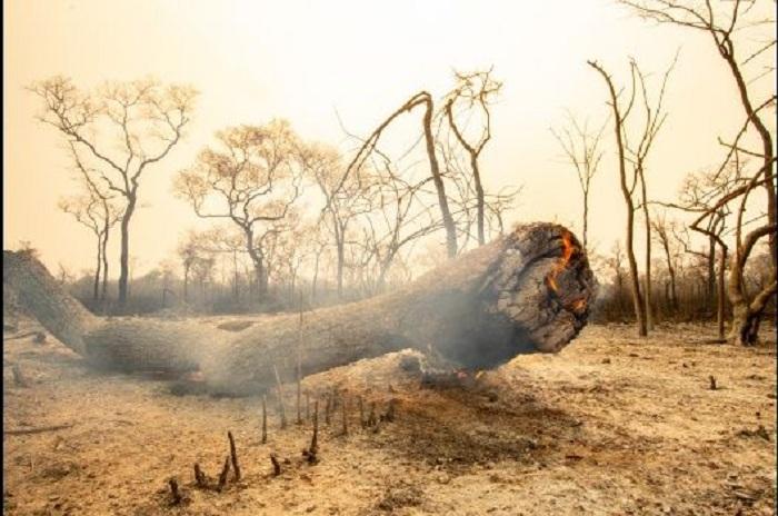 Los focos de calor han disminuido en gran parte, gracias a los bomberos voluntarios  / EL  DEBER