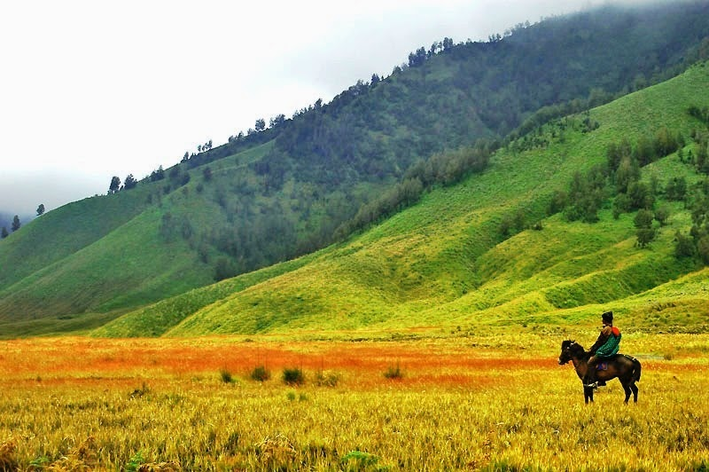 Savana hill Bromo