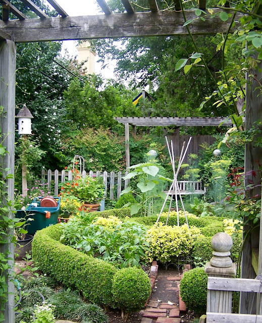 Looking through the front arbor into the boxwood enclosed kitchen garden with dill, peppers and sunflowers.