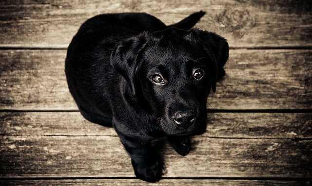 Black Dog Images HD