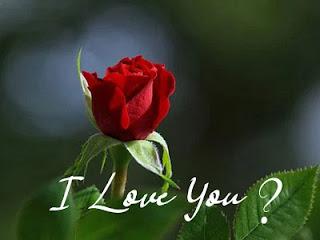 download red rose single stick rose rose wallpaper hd rose wallpaper for mobile rose wallpaper free