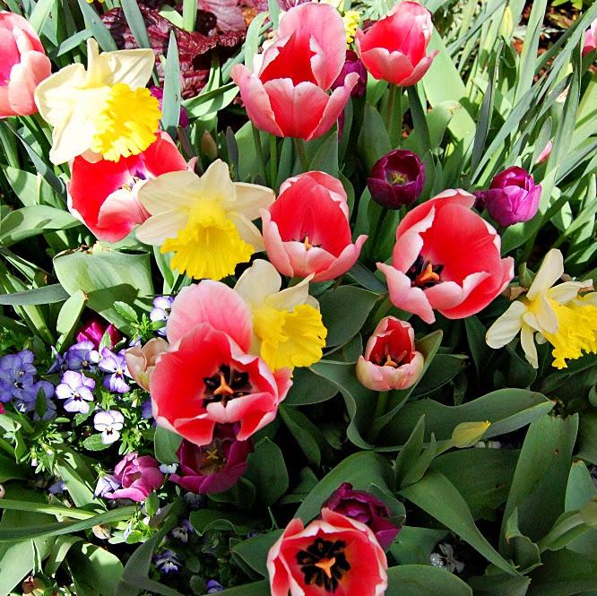 Happy Earth Day at the Dallas Arboretum