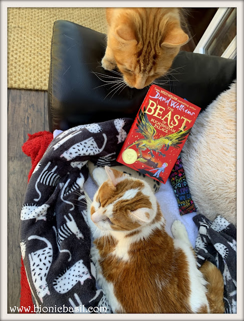 Feline Fiction on Fridays #131 ©BionicBasil® The Beast of Buckingham Palace -  Fudge trying to Usurp Amber's Copy
