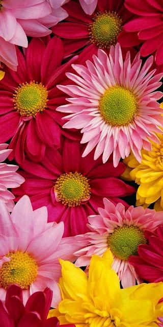iphone  wallpaper live download flower