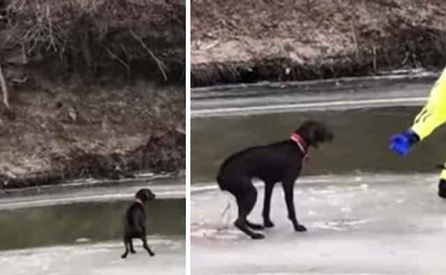 VIDEO: un perro se aferraba a la vida en un pequeño trozo de hielo en un río..