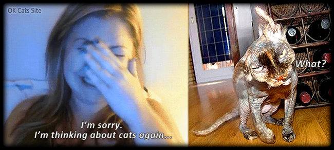 """Photoshopped Cat picture •  Girl crying """"I'm sorry, I'm thinking about cat again."""" [ok-cats-site.com]"""