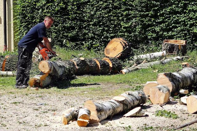 توظيف عمال غابات