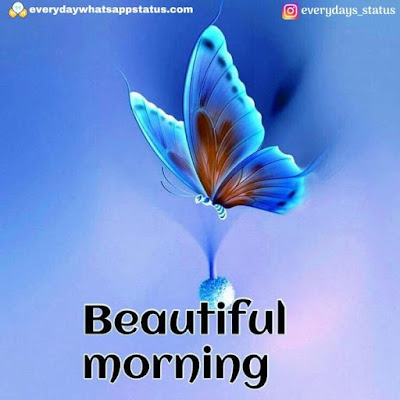 good morning images | Everyday Whatsapp Status | Unique 20+ Good Morning Images With Quotes