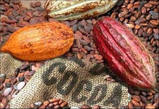Cocoa Flavanol Consumption Shown to Improve Memory, Brain Function