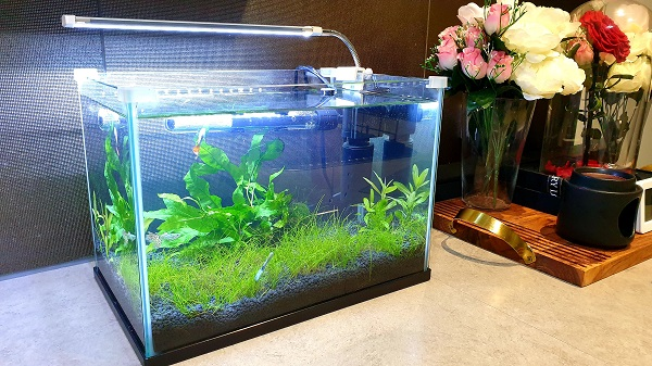 How to warm aquarium water without using heater?