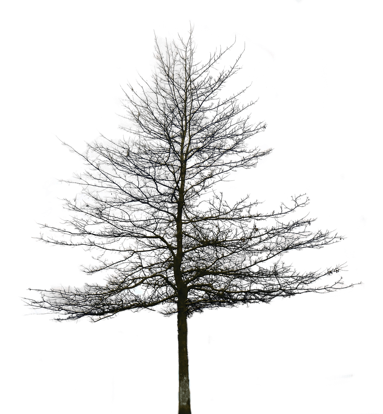 Part01 Hd Tree Zip File For Photoshop And Picsart