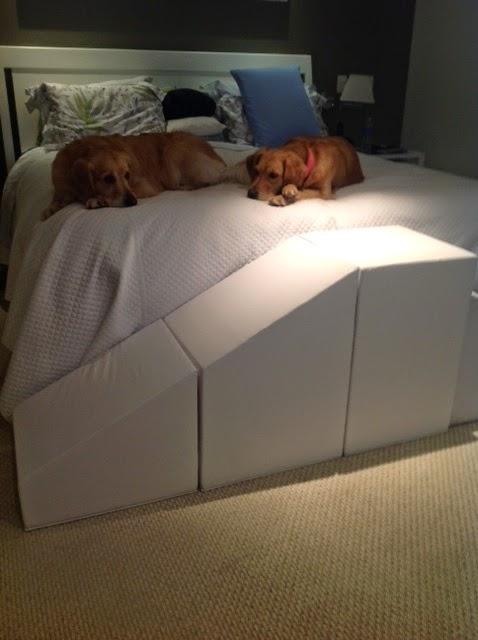 golden subindo na cama