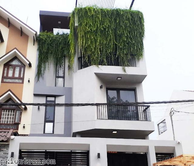 Mảng cây rũ xanh tốt trên sân thượng nhà phố