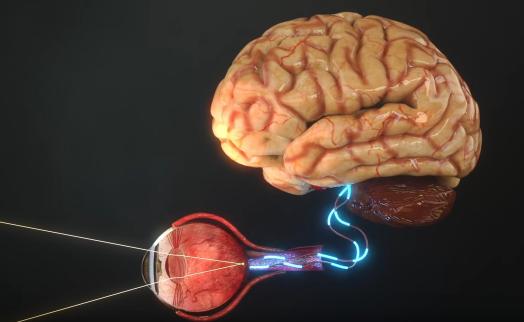 Proses diubahnya bayangan menjadi impul syarat ke otak