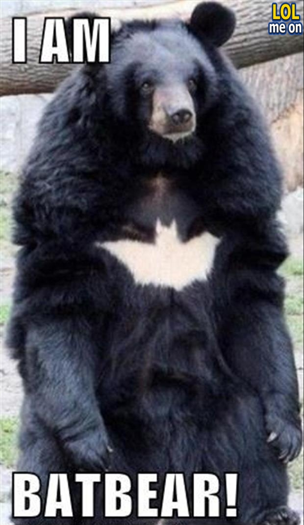 "funny animal picture shows a bear with batman logo from ""LOL me on"""