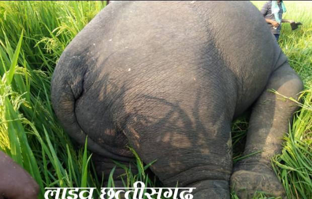 Jangli hathi, live chhattisgarh news