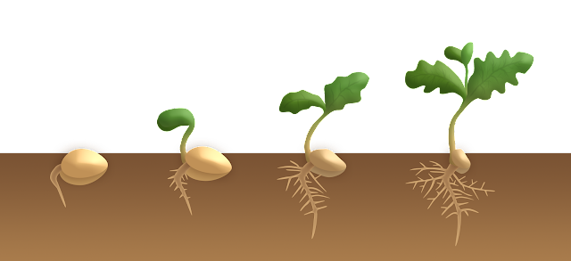 seed dormancy,seed germination,seed dormancy in hindi,germination of seed,seed,seed germination animation,seed dormancy definition,seed dormancy definition biology,seeds,seed dormancy in hindi (bsc ad 1st sem),dormancy,germination of seeds,seed dormancy in plants,reasons for seed dormancy,in hindi seed dormancy,seed dormancy video,types of seed dormancy,seed dormancy lecture,seed parts and functions