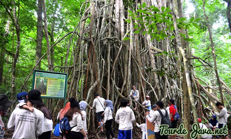 wisata trekking menelusuri alam bebas pulau peucang ujung kulon