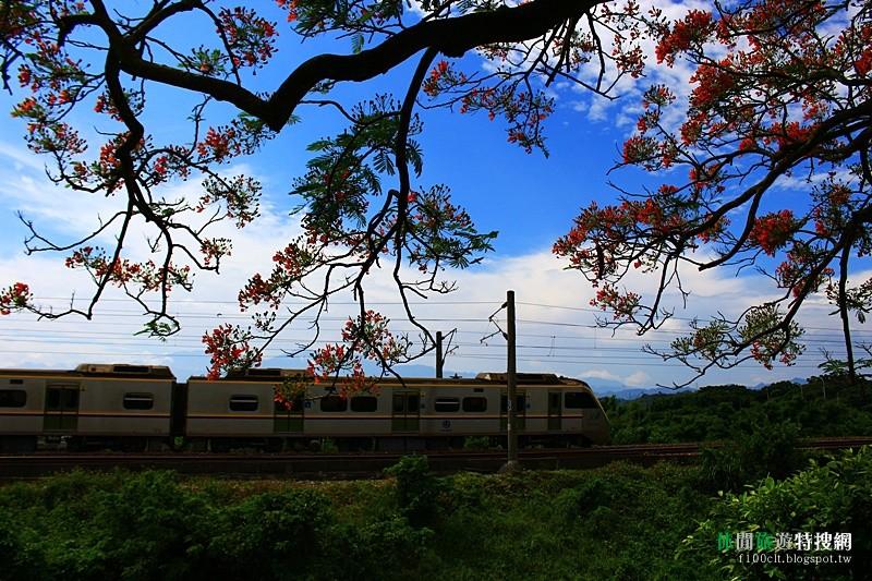 [臺灣.苗栗] 造橋火車下的鳳凰樹 綠池庭園餐廳