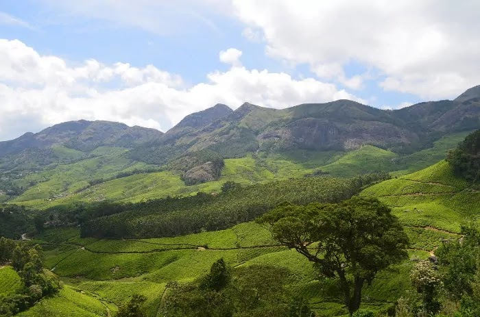 munnar, Best Places for Honeymoon in India