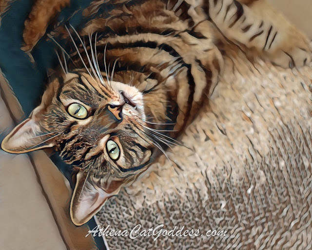 cat art of beautiful brown tabby cat