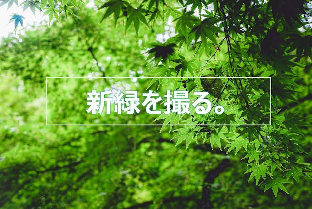 緑,新緑,紅葉