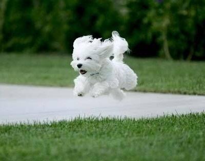Perrito corriendo y saltando en el jardín.
