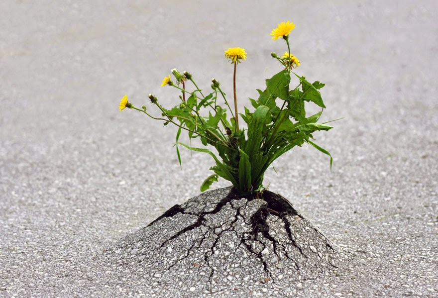 It looks like the ground is literally holding this bouquet up for someone to grab as they go about their day, a little gift from the natural world down under. - Life Finds A Way. 25 Plants That Just Won't Give Up