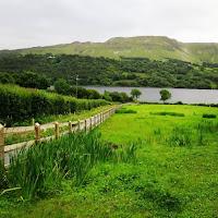 Pictures of Ireland: field in County Sligo