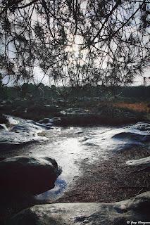 Platière du Larris qui parle, Trois Pignons, FD de Fontainebleau