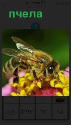 на цветке сидит пчела и собирает нектар