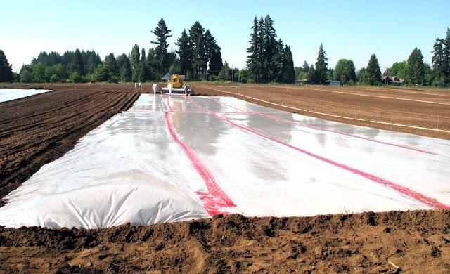 تعظيم كفاءة استخدام المياه عن طريق اغطية التربة العضوية المختلفة  ومستويات الري