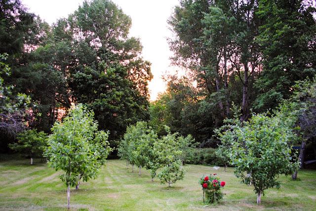Suvine päikeseloojang viljapuuaias