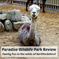 Paradise Wildlife Park Review with a white alpaca sitting down