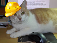Real Cat Webster wearing a yellow hard hat.
