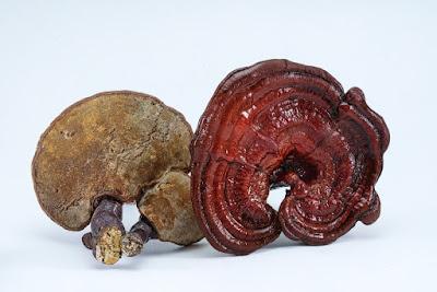 Ganoderma mushroom company in Bhubaneswar