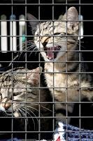 Le mal des transports chez les carnivores de compagnie : que faire ?