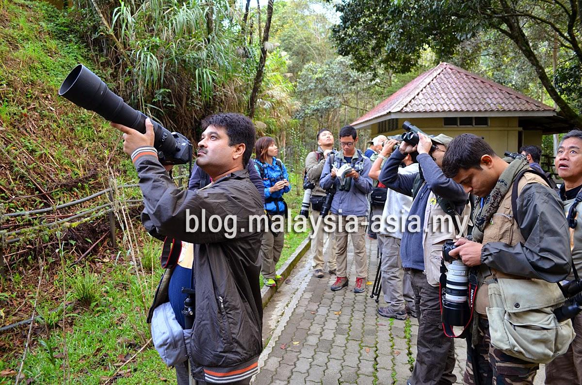 Bird Watching Tourism Malaysia
