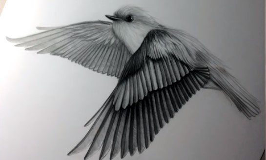How to Draw Birds Flying Away in the Sky Step By Step