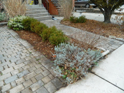 York Humewood Fall Cleanup Front Yard After by Paul Jung Gardening Services--a Toronto Gardening Company